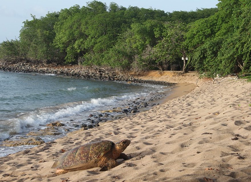 Voyage en Guadeloupe Outre-Mers