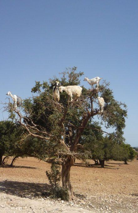 Voyage au Maroc Afrique