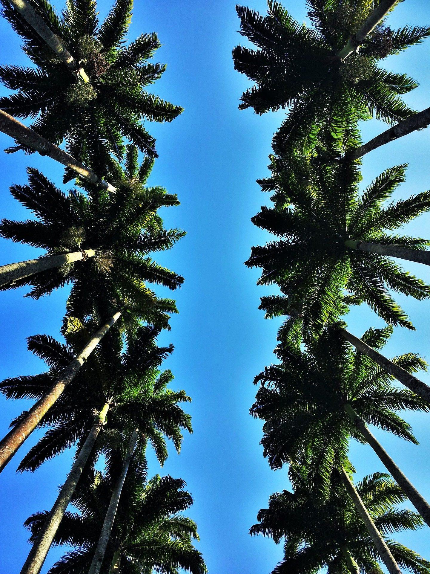 vacances au soleil et palmiers voyage sur mesure